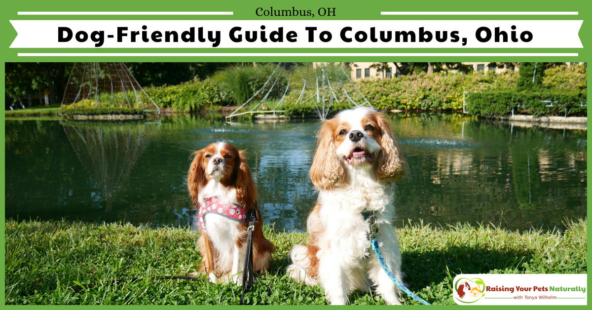 Dog Friendly Vacations In Columbus Ohio Pet Friendly Hotel