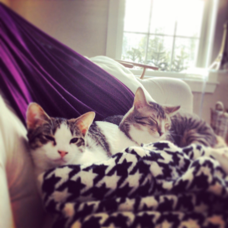 Milo and Minouche