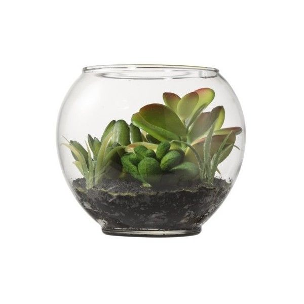 "Threshold Faux Succulents in Glass Terrarium - Mixed Sedum 3.75"" (83 SEK) ❤ liked on Polyvore featuring home, home decor, floral decor, plants, fillers, decor, flowers, artificial flowers, decorative accents and silk flower arrangement"