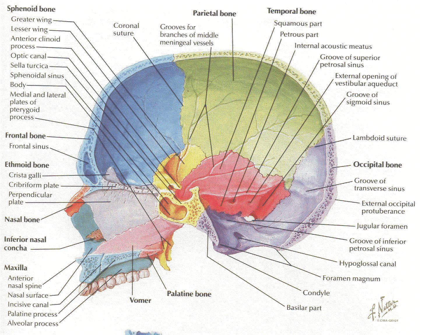 Beste Midlands Tech Anatomy And Physiology Galerie - Anatomie Von ...