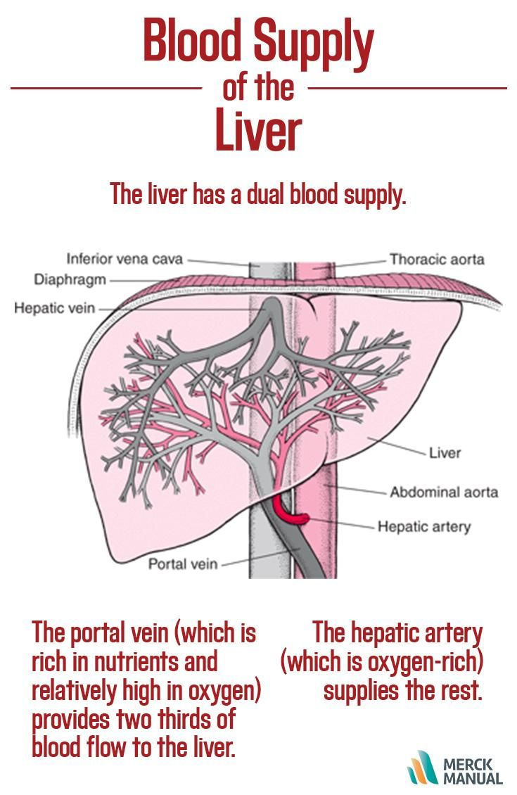 Despite Its Dual Blood Supply The Liver A Metabolically Active