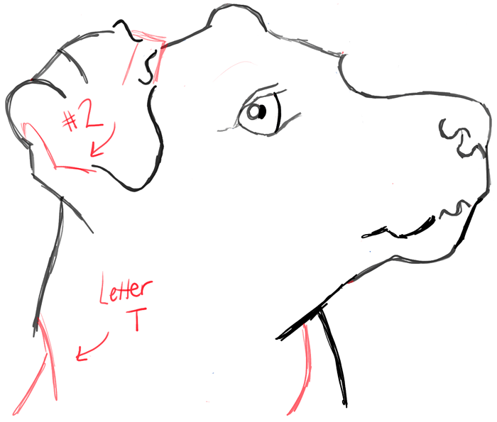 learn how to draw a realistic terriers face with the following easy to follow step