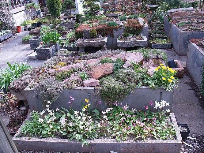 More Concrete Slab Raised Beds Recycled Garden Alpine Plants