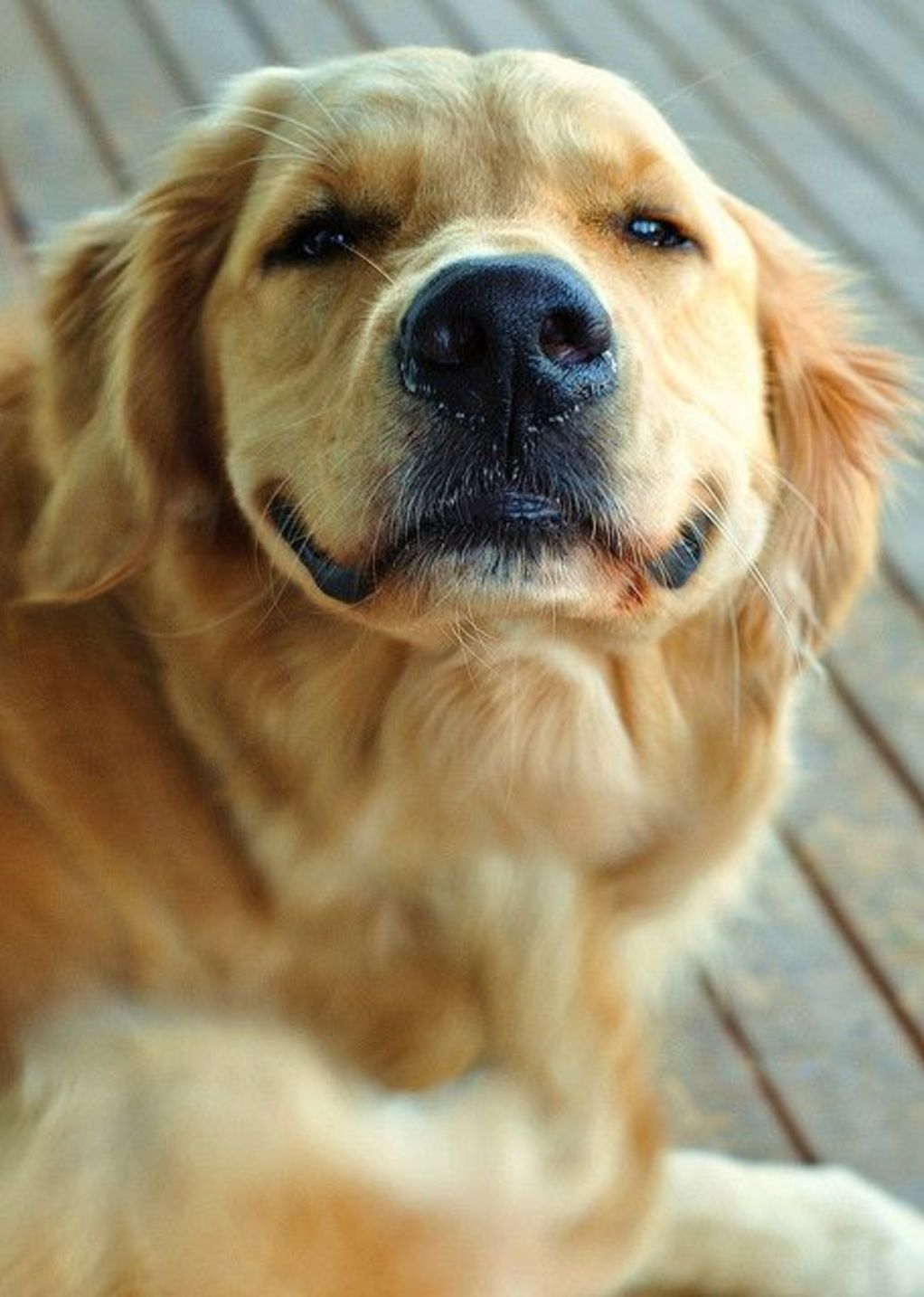 31 Super Happy Animals That Will Leave You Smiling Happy Animals