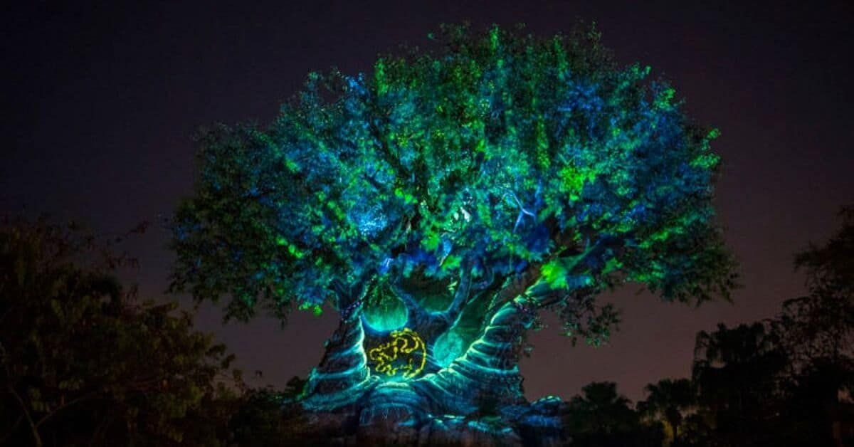 NEW Animal Kingdom Attractions in Disney World #animalkingdom The links in this …
