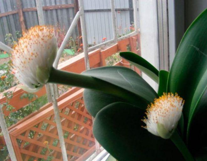 Комнатные цветы: фото и названия, уход в домашних условиях ...