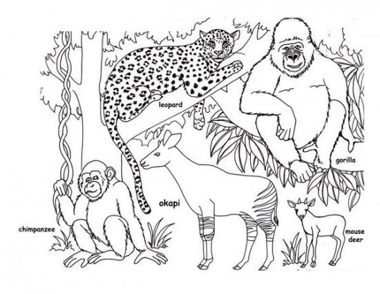 RainForest Coloring Pages Picture 15 | 학원 | Pinterest ...