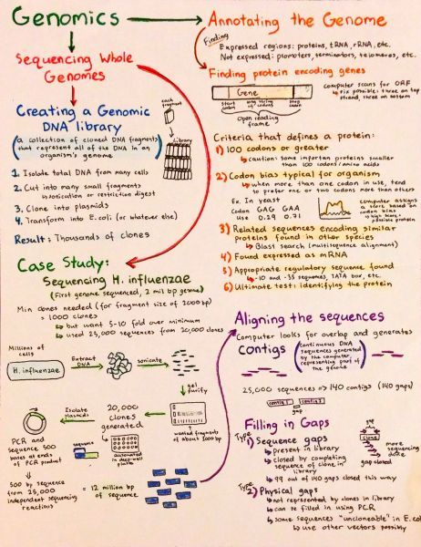Intro To Genomics Genetica Pinterest Molecular Biology And