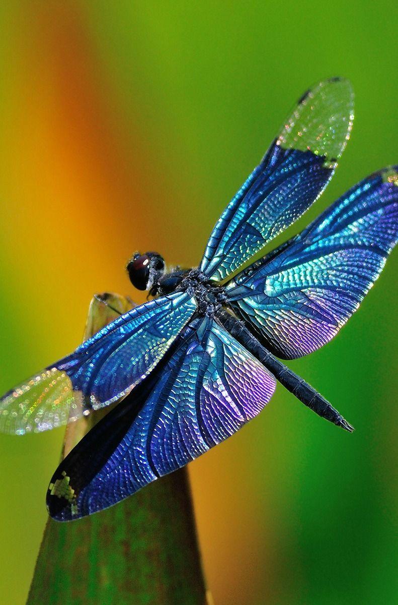 insectos más asombrosos
