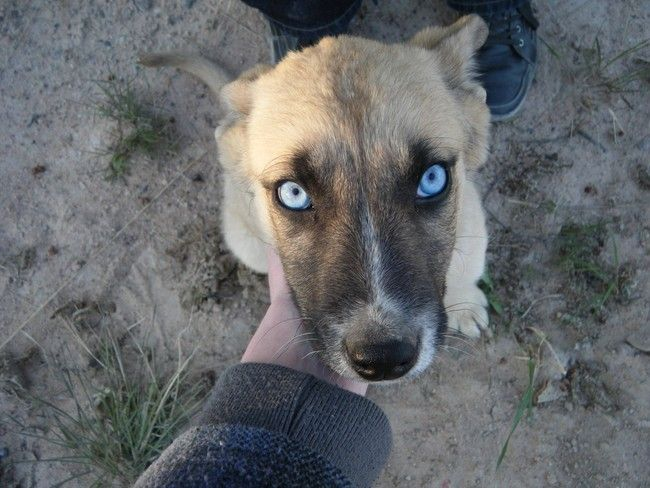 36 Animals With The Most Unusual And Gorgeous Eyes Animaleyes