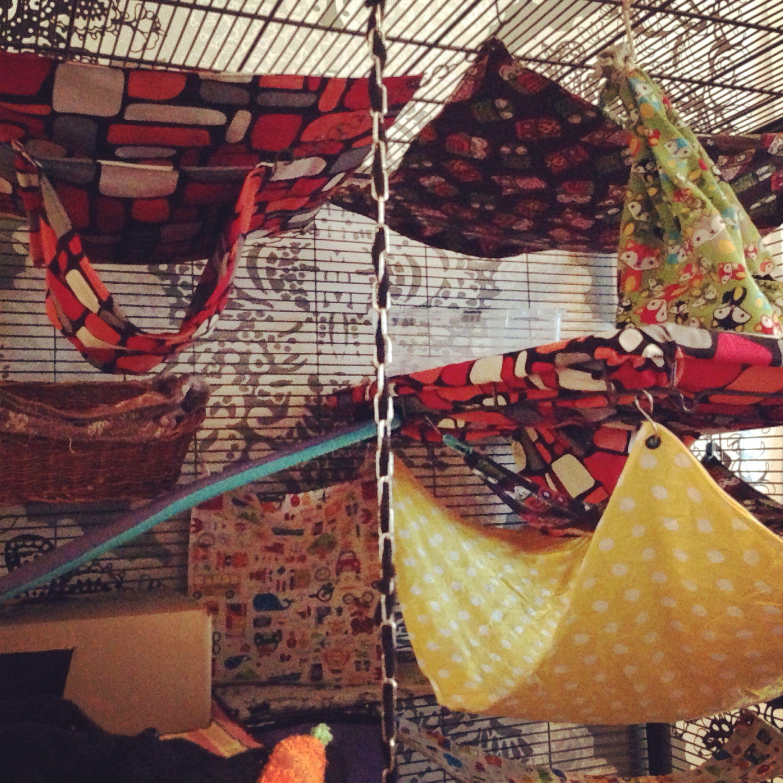 DIY hammocks for rats