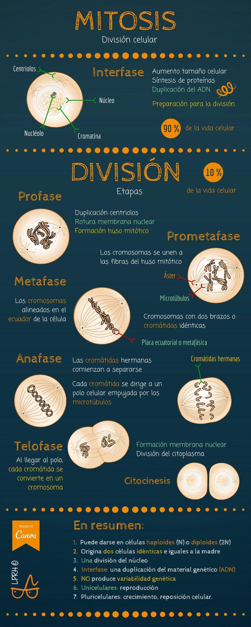 Pin de jhared gutierrez en Ciencia | Pinterest | Biología, Medicina ...
