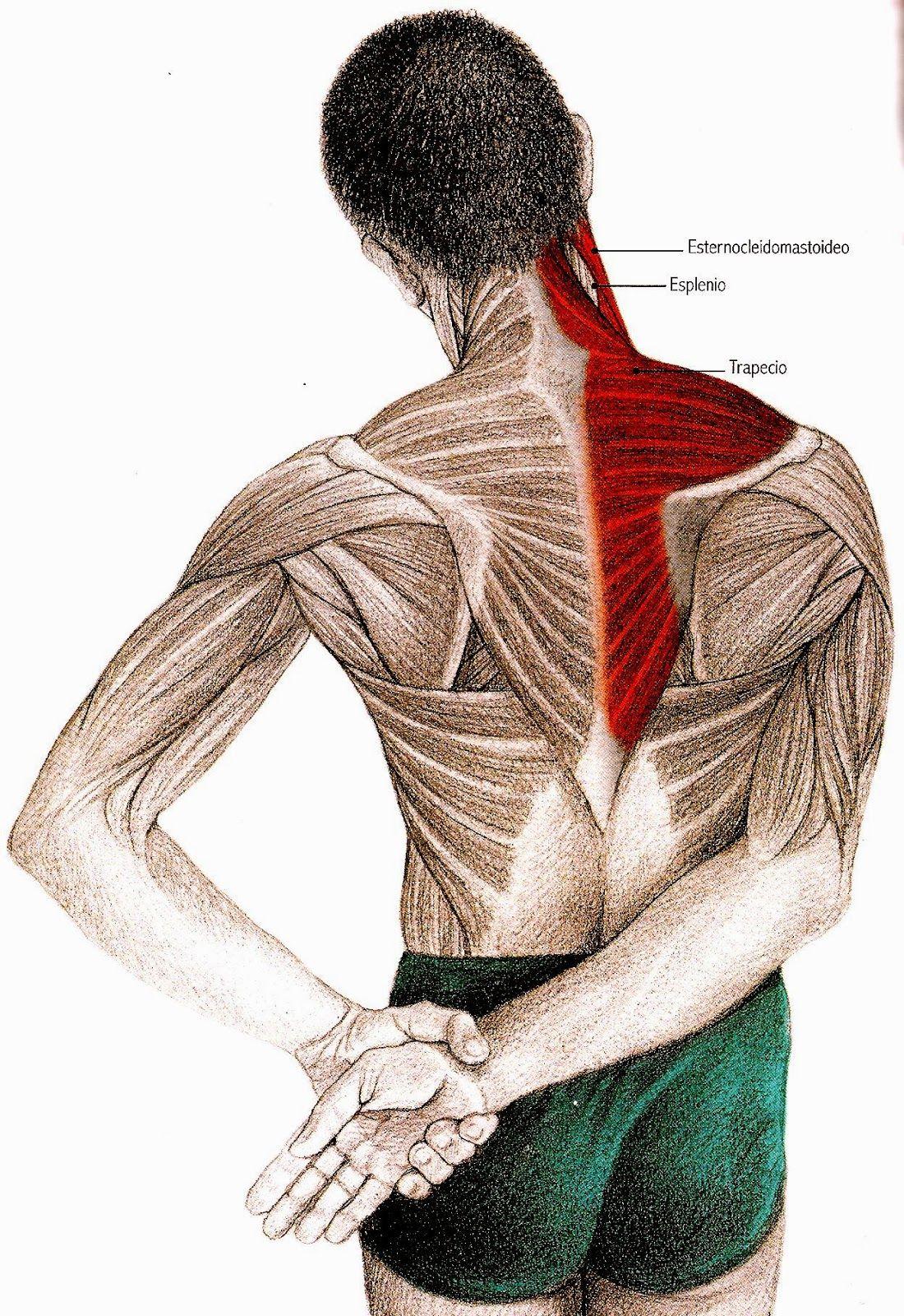 Junto con la espalda, el cuello y los hombros, es una de las zonas ...