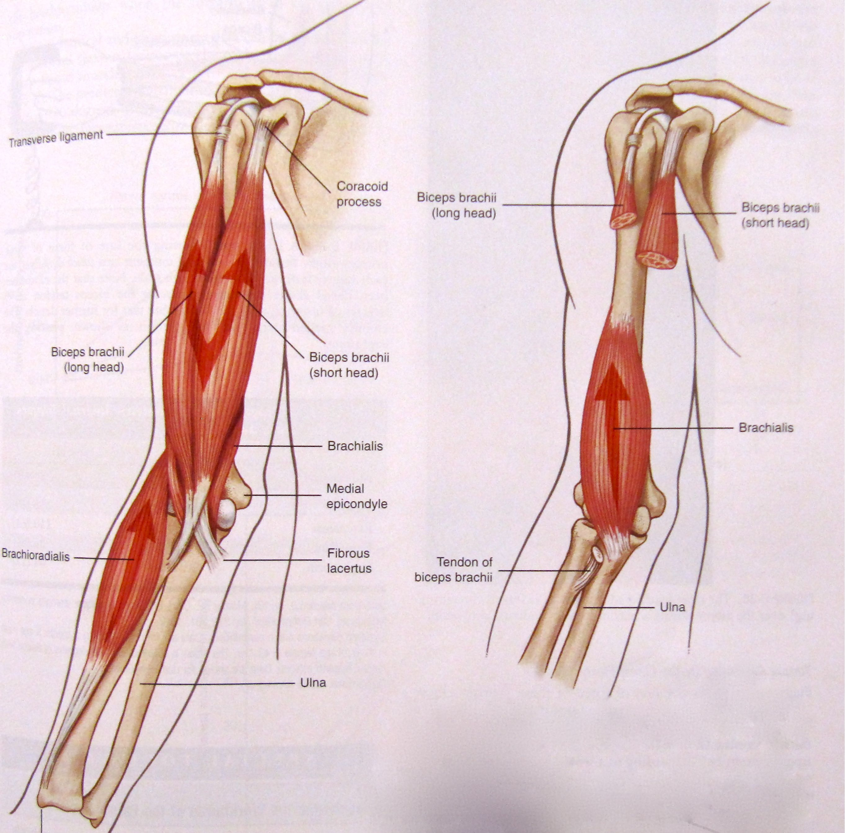 More Ways to Hammer Your Biceps | Interesting | Pinterest
