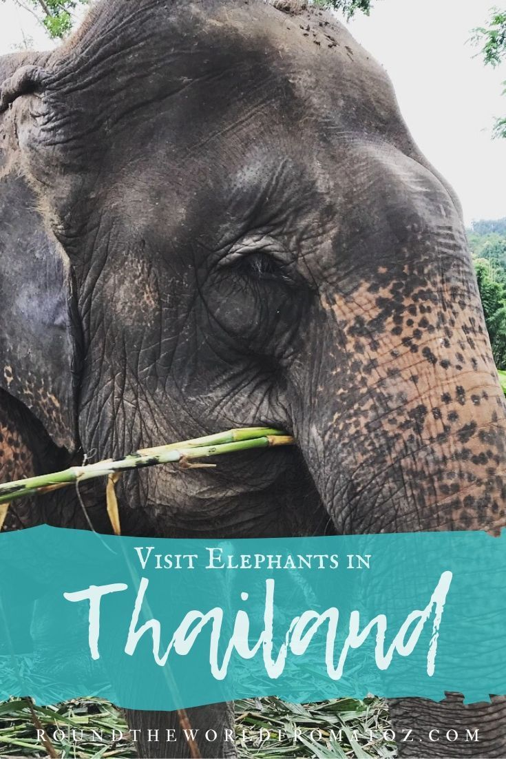 Everything you need to know about visiting and interacting with elephants in a responsible way. #elephants #thailand #travel #tourism