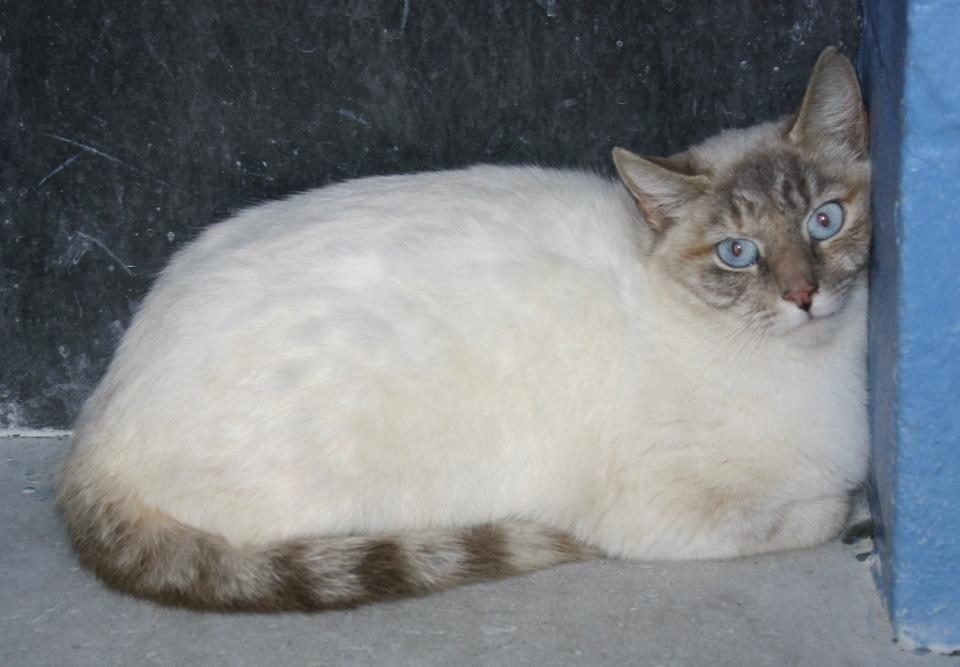 Rowan County AS (Salisbury, NC) In the outdoor cats runs