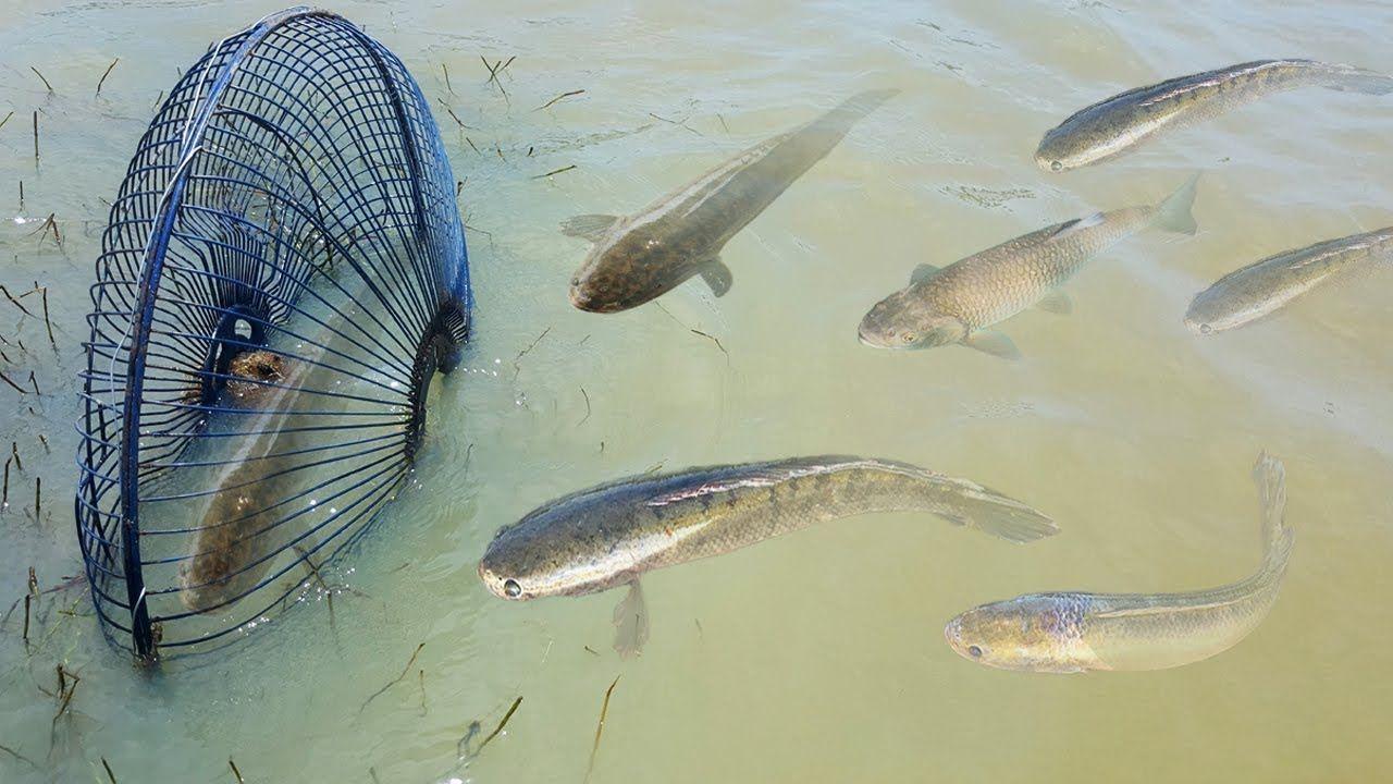 amazing fishing video