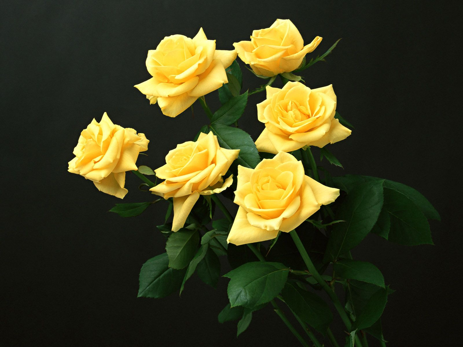 """Flowers That Say """"Let s Have """" Flowers Pinterest"""