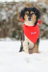 Zeit für ein Schneeshooting - http://fotografie-erlangen.de/blog/zeit-fuer-ein-schneeshooting/?pk_campaign=Pinterest&pk_kwd=Zeit+f%C3%BCr+ein+Schneeshooting