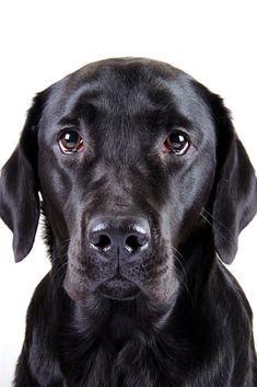 Hundebabys Von Daniel Wiens Auf Rollstuhle In 2020 Hunde Babys Golden Retriever Labrador