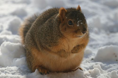 Pin On Charm Cheers from the chubby squirrel! pin on charm