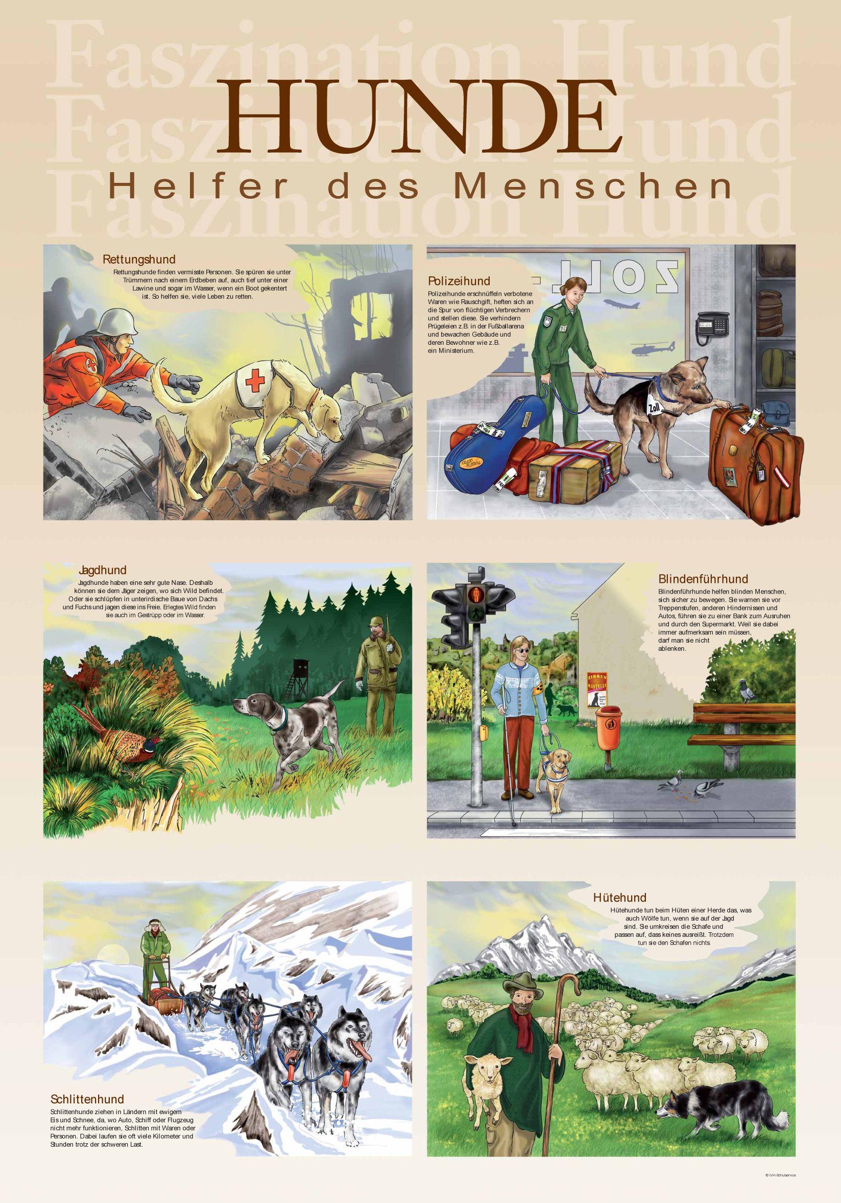 Poster Hundeberufe   1-2-3 ... a-b-c   Pinterest