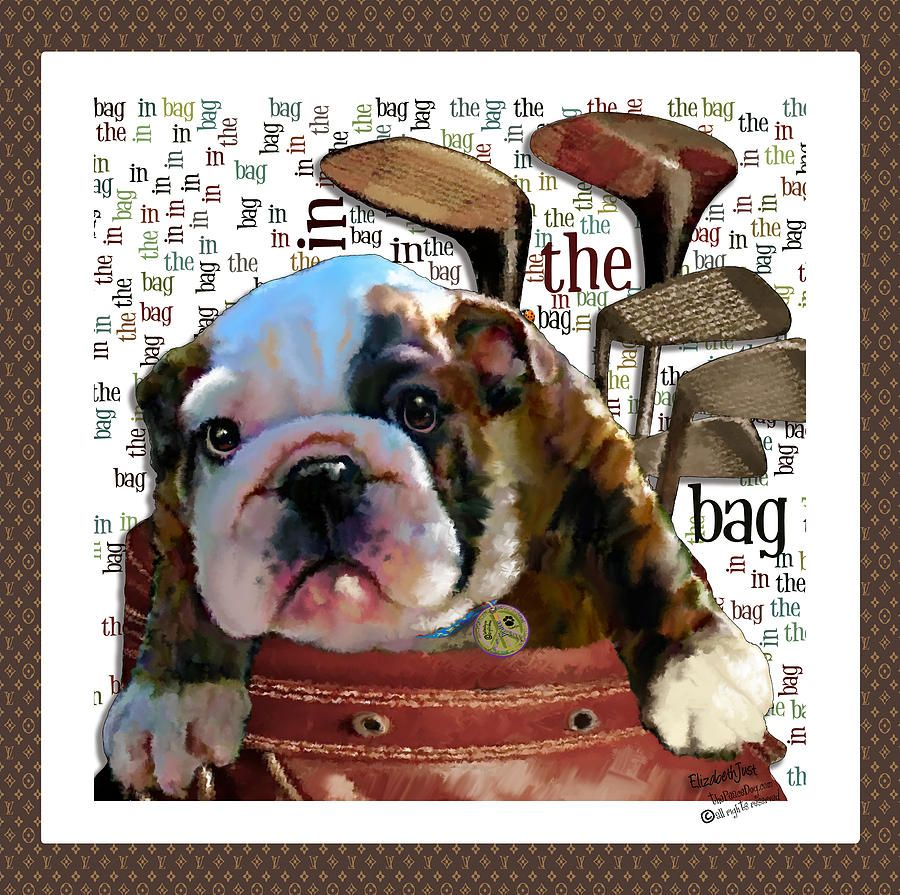 In The Bag Photograph In The Bag Fine Art Print Bulldogs