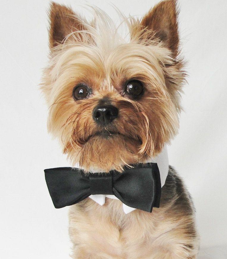 Dog Tuxedo, dog wedding attire, dog wedding collar, black bow tie, tuxedo collar, dog Wedding, Dog Collar, dog clothes large and small pets