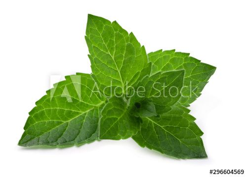 Stock Image: Green fresh mint leaves isolated on a white background.