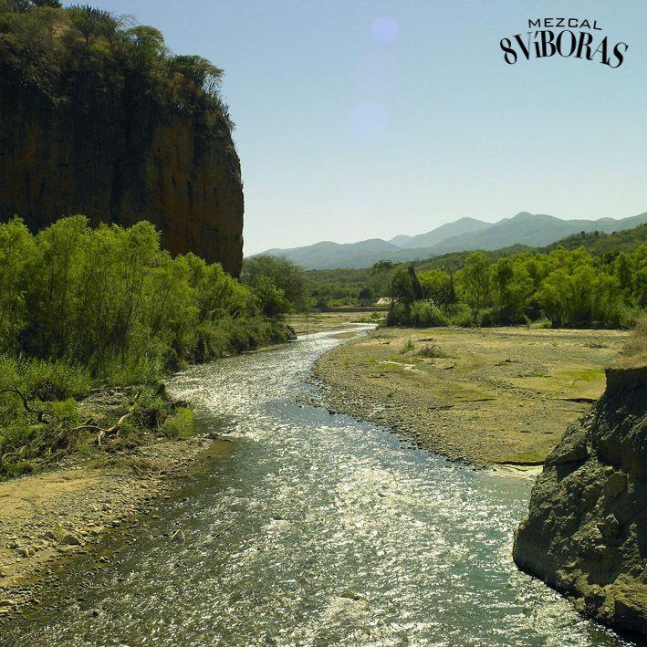 8 víboras, 8 regiones Región: La Cañada  La Cañada oaxaqueña es una región de múltiples contrastes, gracias a su accidentada orografía y su considerable asentamiento de diversos grupos culturales. También es la región más pequeña del estado.