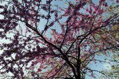 Árbol Primavera