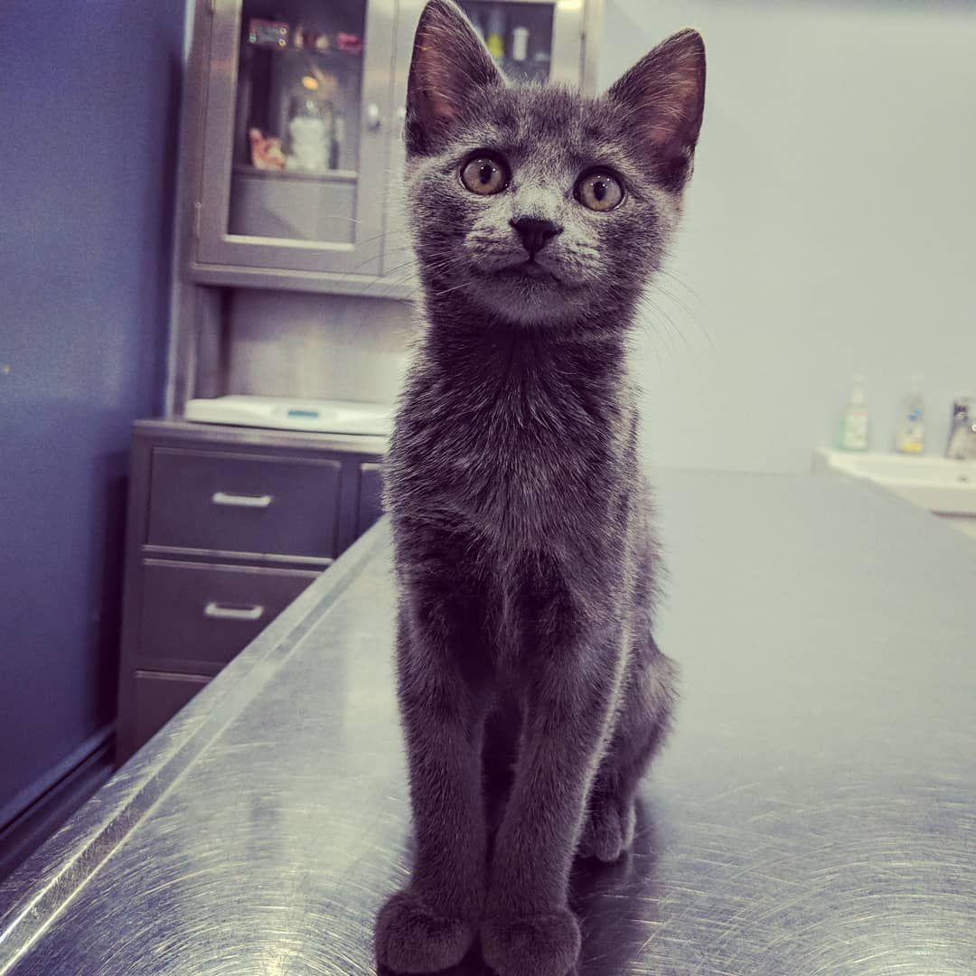 11 Likes 1 Comments Tom Ellison Tellison27 On Instagram Our Good Boy Zucchini Back At The Vet For His Booster Shots Cats Kittensofi Kitten Cat S Vets