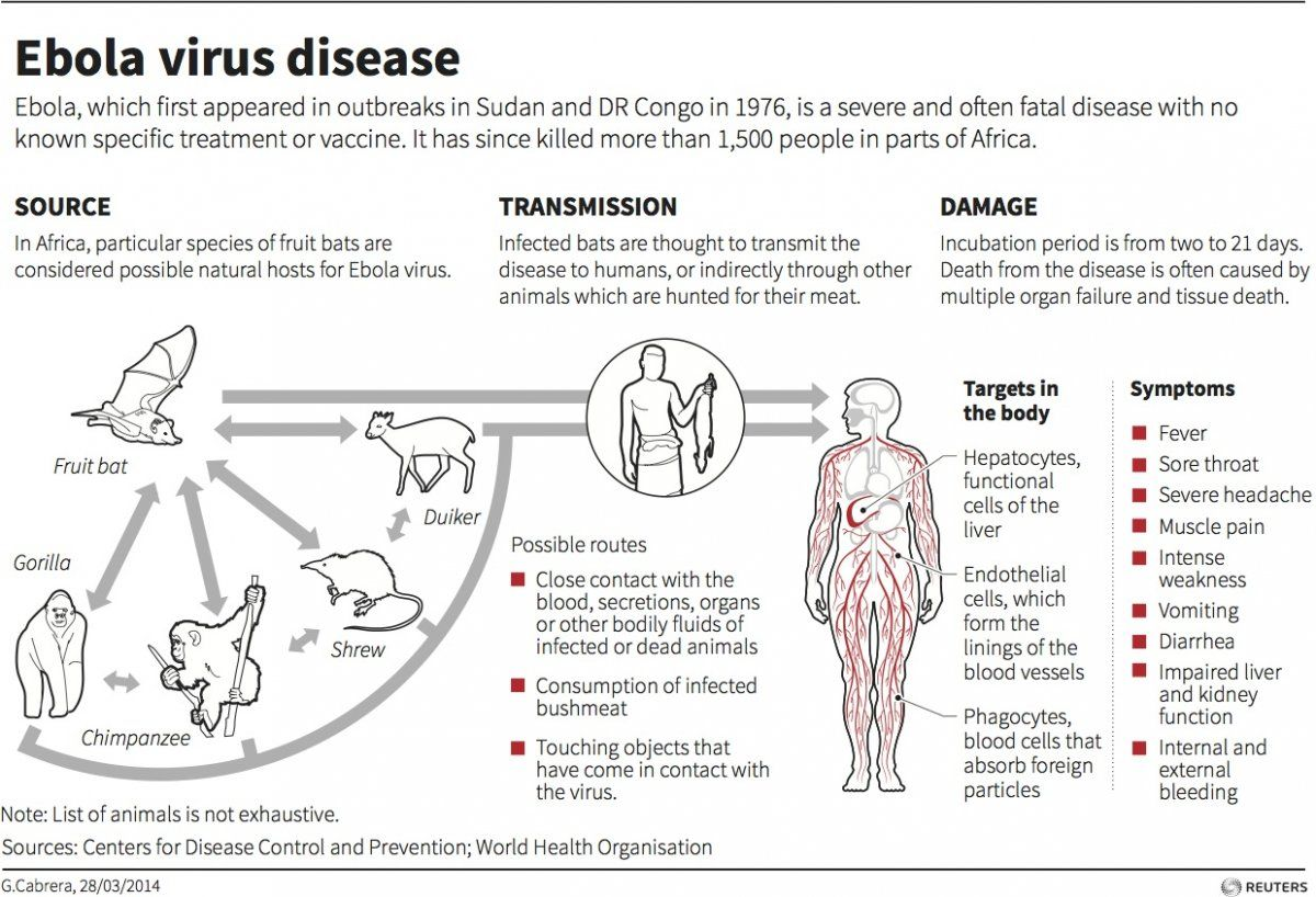 Ebola virus disease: Source, transmission, damage.
