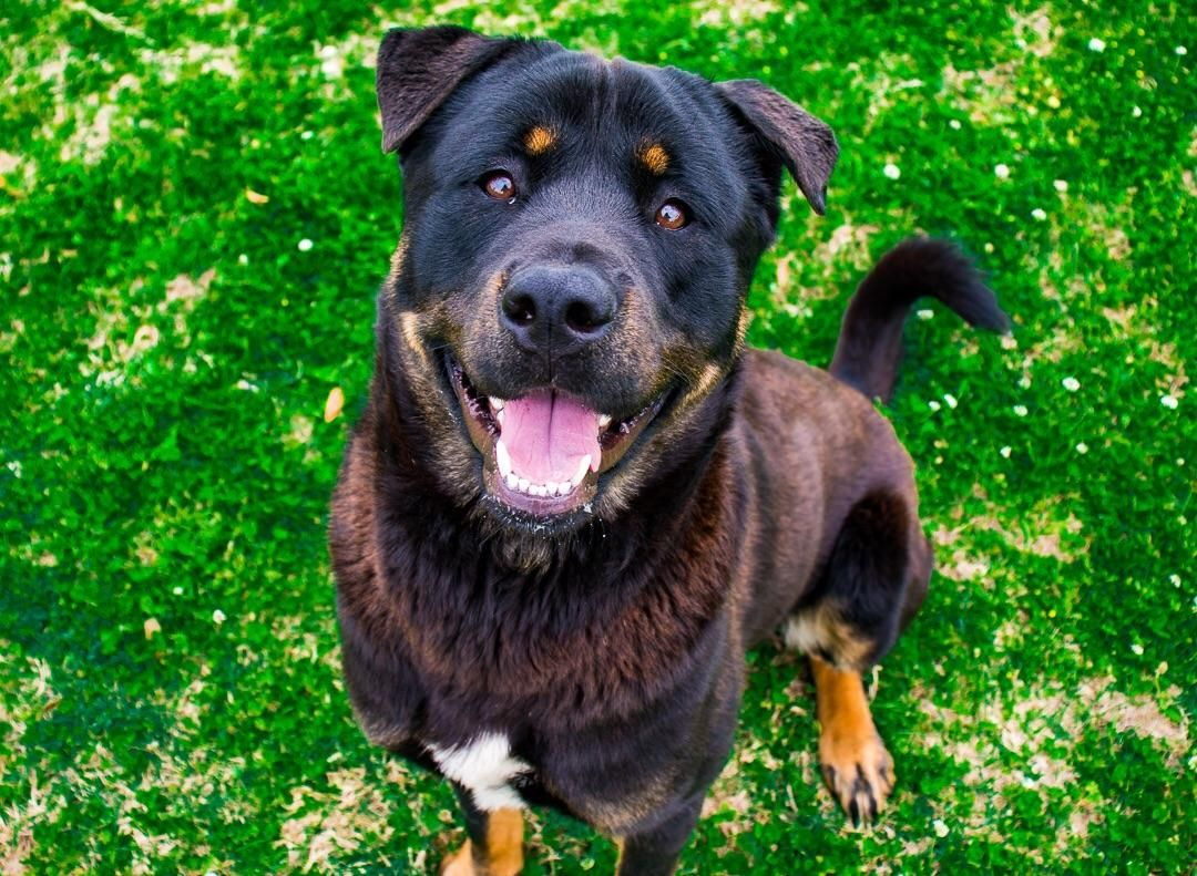 I Volunteer At The Animal Shelter Taking Pics And Videos Heres A Good Boy Who Needs A Home Http I Funny Looking Cats Kittens And Puppies Cute Cats And Dogs