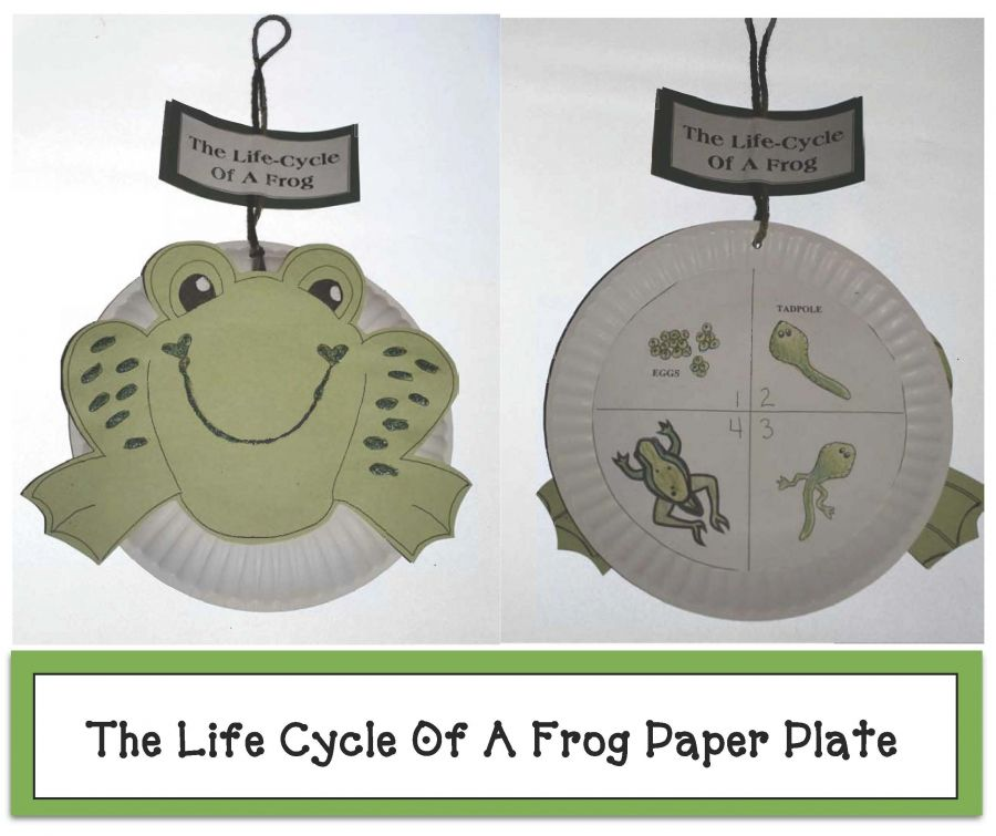 Life Cycle Of A Frog Paper Plate Craftivity  sc 1 st  Pinterest & Life Cycle Of A Frog Paper Plate Craftivity   Frogs Cycling and ...