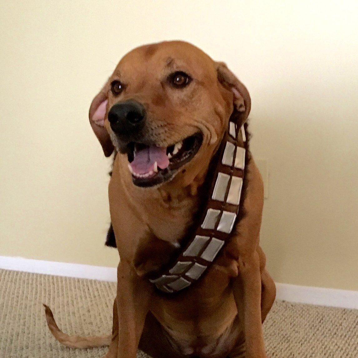 Pin By Hanna Oliveaux On Bella Chewbacca Costume Best Dog