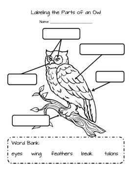 worksheet for labeling the parts of an owl  eyes  beak