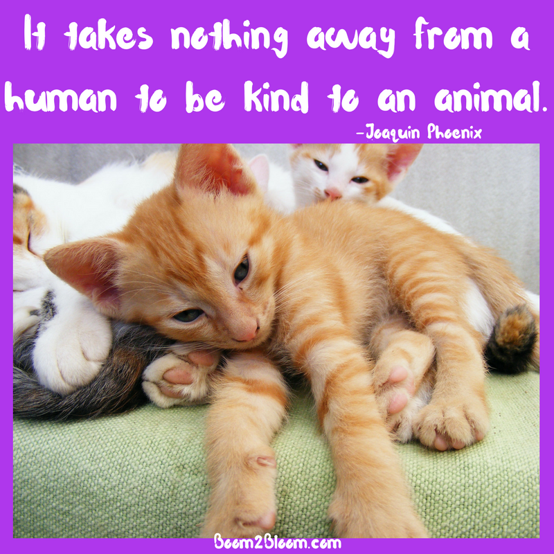Animal Quotes Heart Soul Mates Boom2bloom Com Cat Quotes Animals Cats