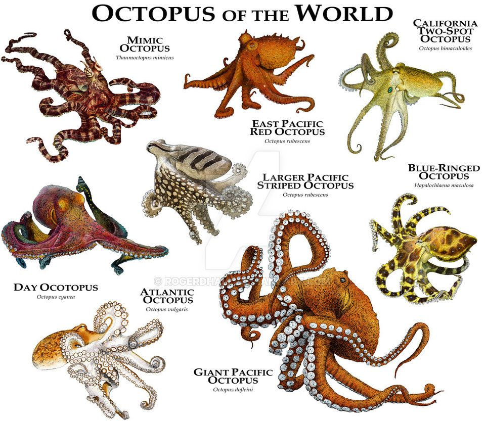 Octopus of the world by on for How many fish are in the world