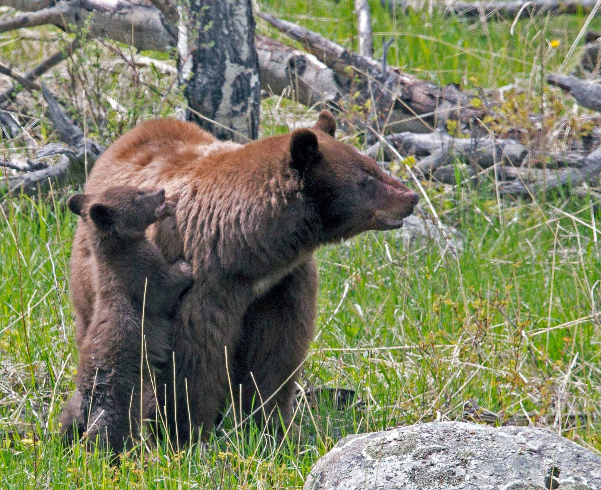 Pin by Dave on Animals of Rocky Mountain National Park ...
