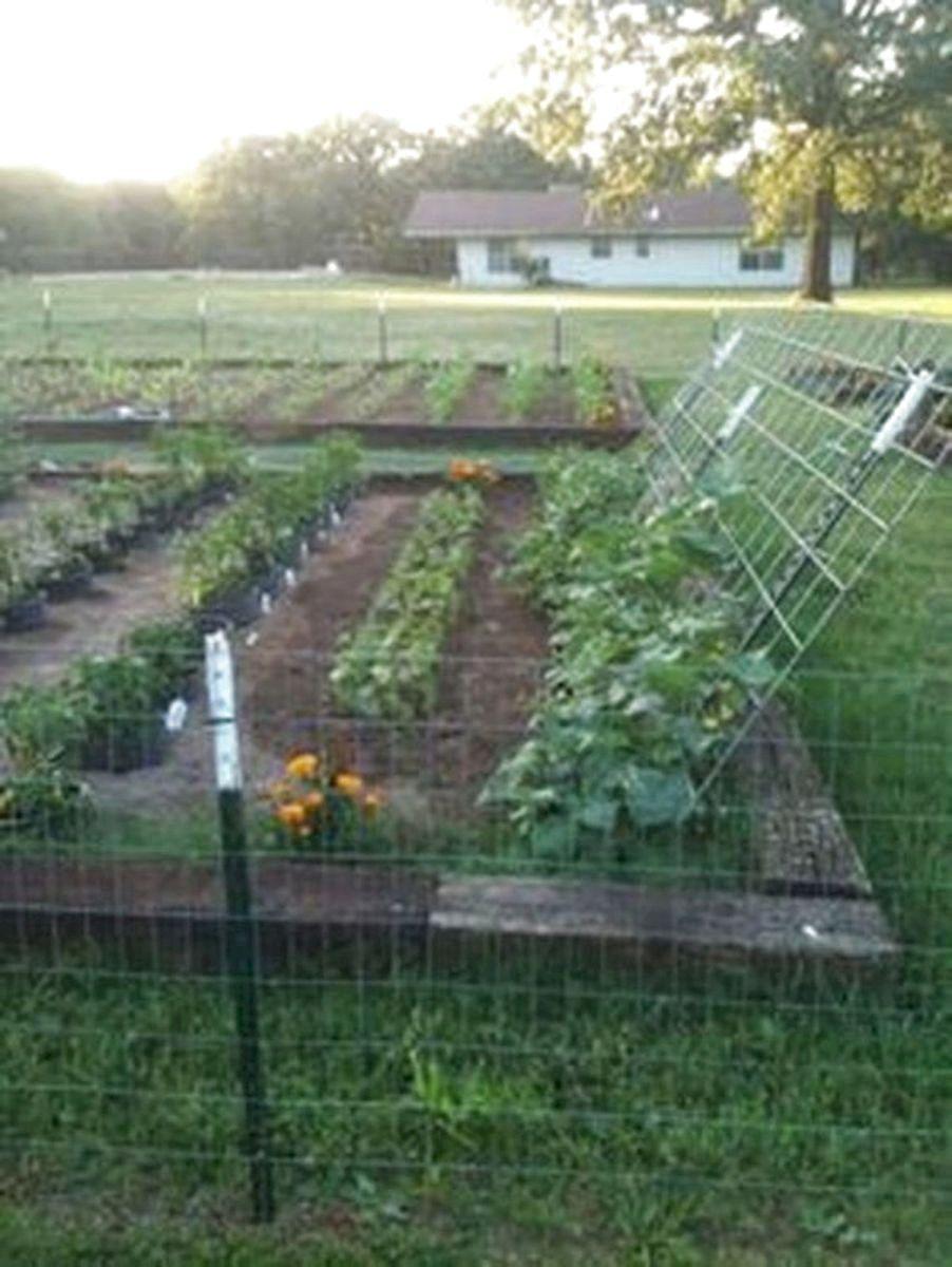 36 Best Vegetables Garden Ideas Home Garden Small Vegetable Gardens Vegetable Garden Design Garden Layout
