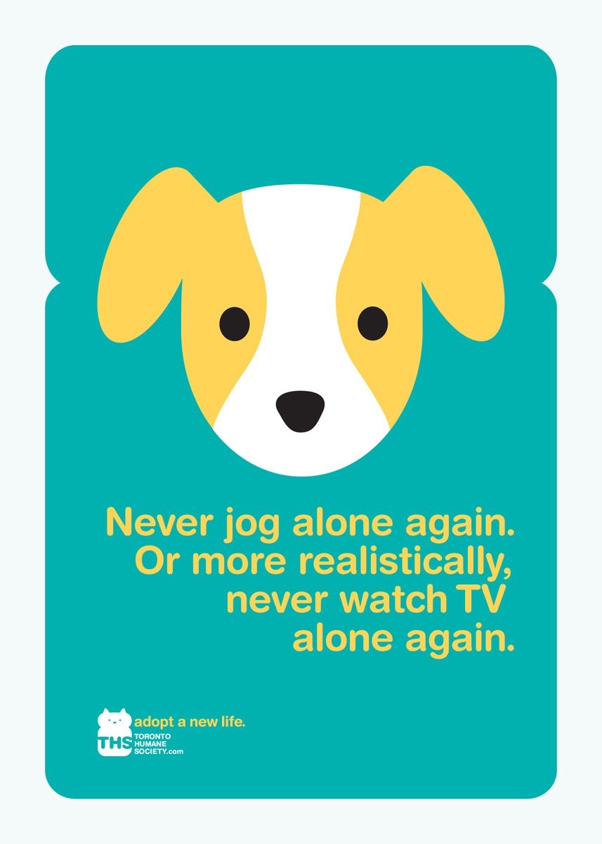 Great Cause Great Marketing Never Jog Alone Again Or More Realistically Never Watch Tv Alone Again Toronto Human Dog Adoption Humane Society Adoption