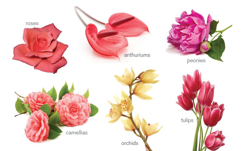 Anthuriums The Flower Symbolism Associated With The Anthruium Is With Their Open Heart Shaped Flowers And Trop Flower Meanings Irish Flower Flower Wallpaper