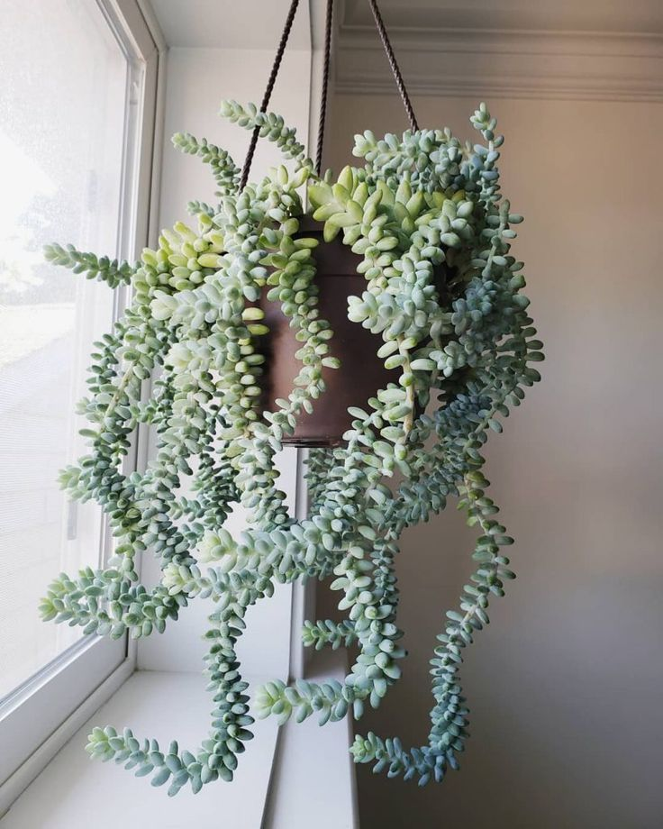 6 Best Indoor Succulents | SucculentCity.com #plantsindoor