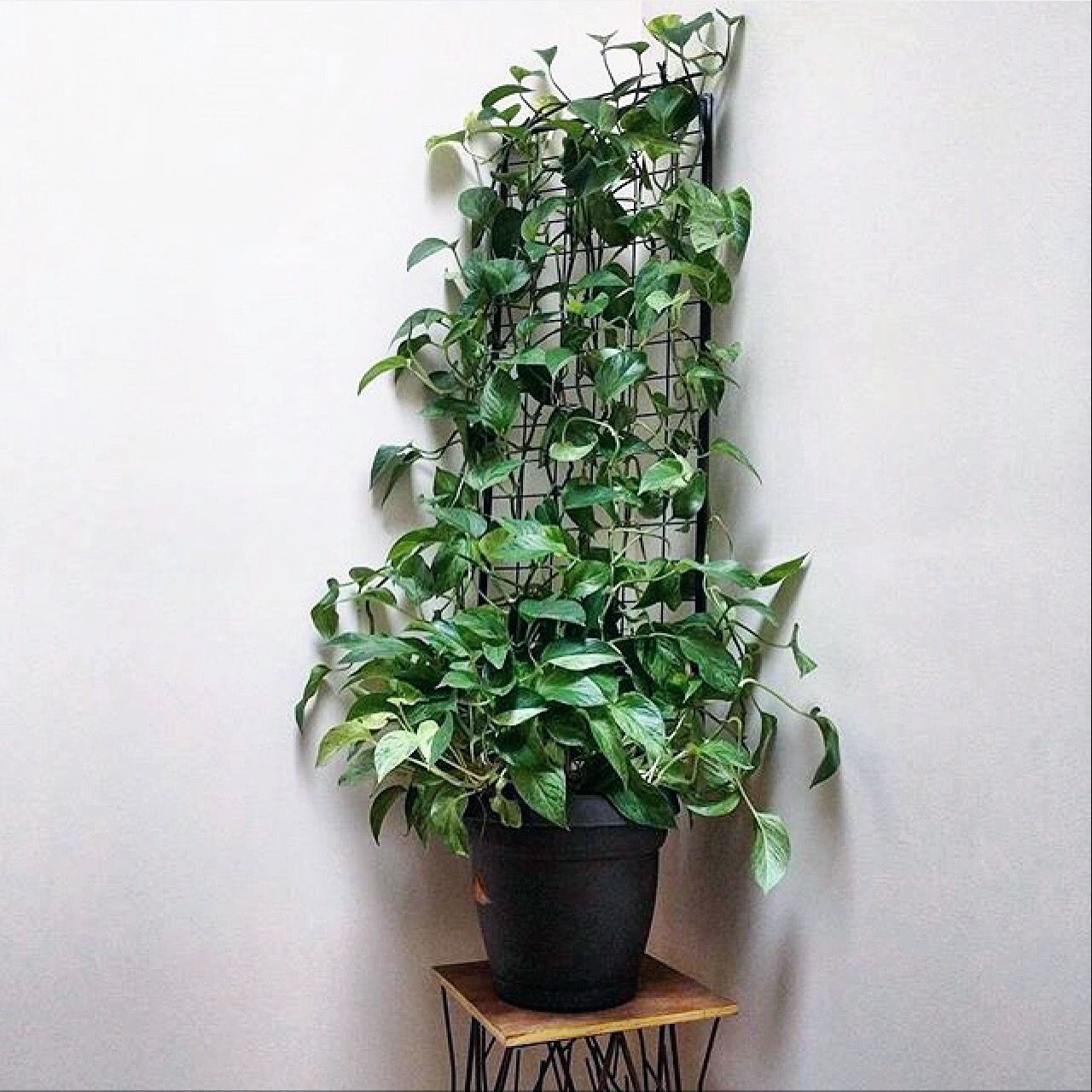 Another Great Project Update Darryl From The House Plant Journal Blog Houseplantjournal Com Posted This Photo Today Of T House Plants Plants Planter Trellis