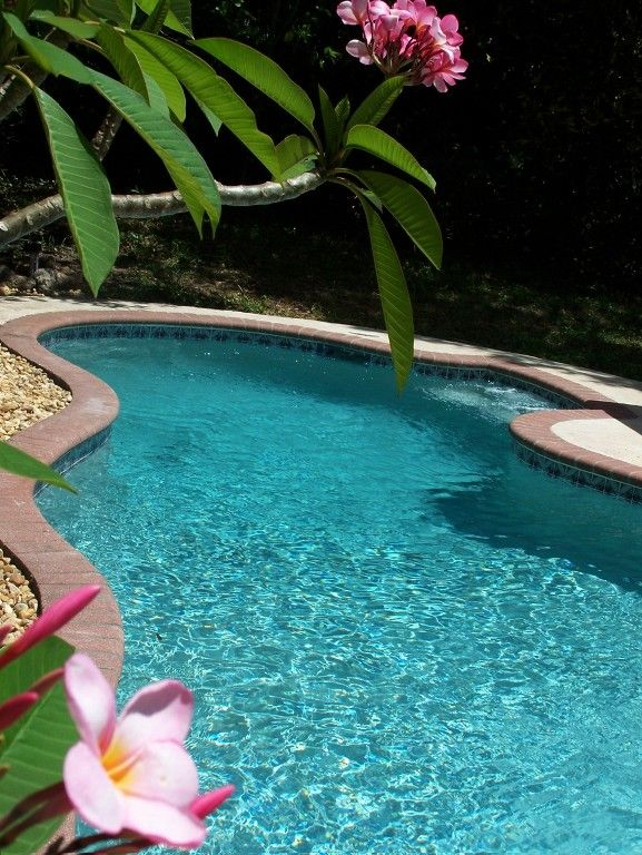Private 3/2 house, newly caged pool, NEW semi-private ...