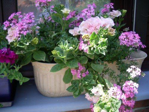 fleurs de jardin une de mes jardinieres verveine et surfinia fleurs et jardins pinterest. Black Bedroom Furniture Sets. Home Design Ideas