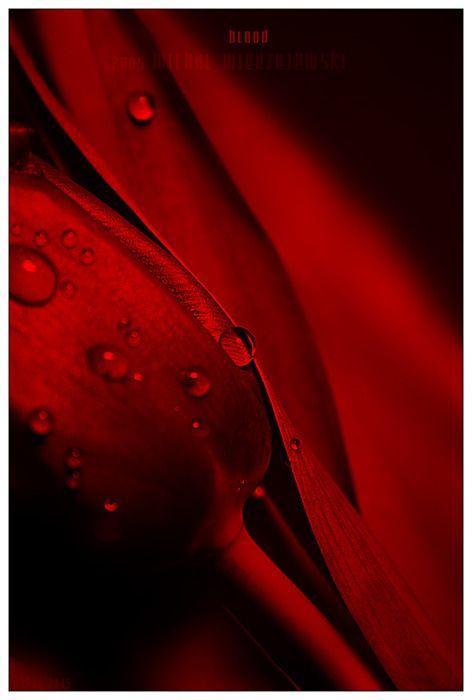 Red Rosé Couleur Rouge, 50 Nuances De Gris, Maison Design, Couleurs Chaudes,