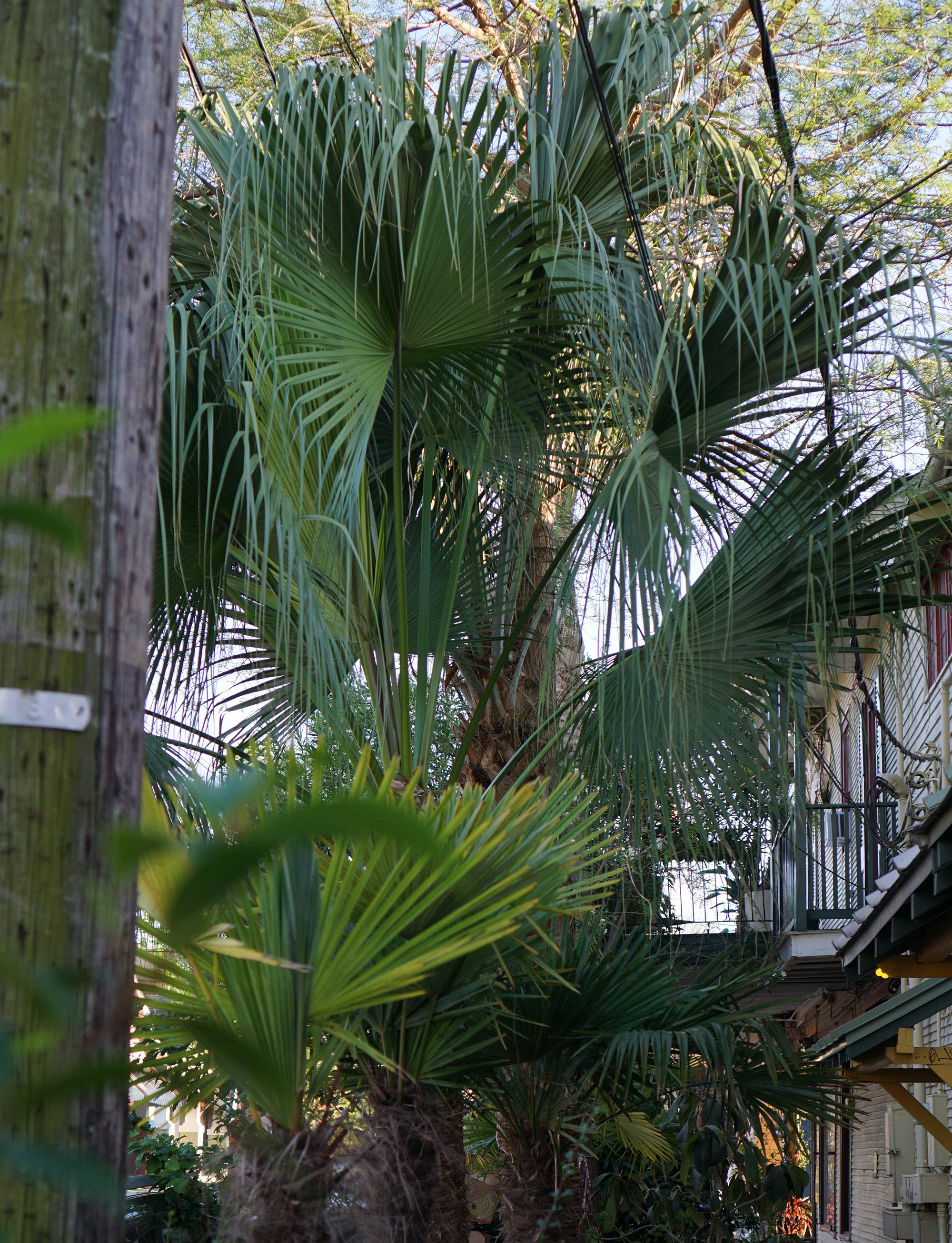 Palms in the Marigny, New Orleans / Darker than Green | greens ...