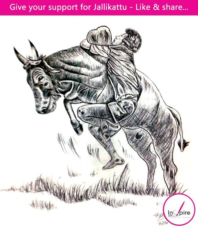 Simple Jallikattu Drawing Images